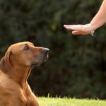 Dog Obedience Training Seaford