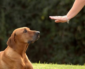 dog obedience training services long island