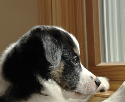 Avoiding Separation Anxiety In Dogs