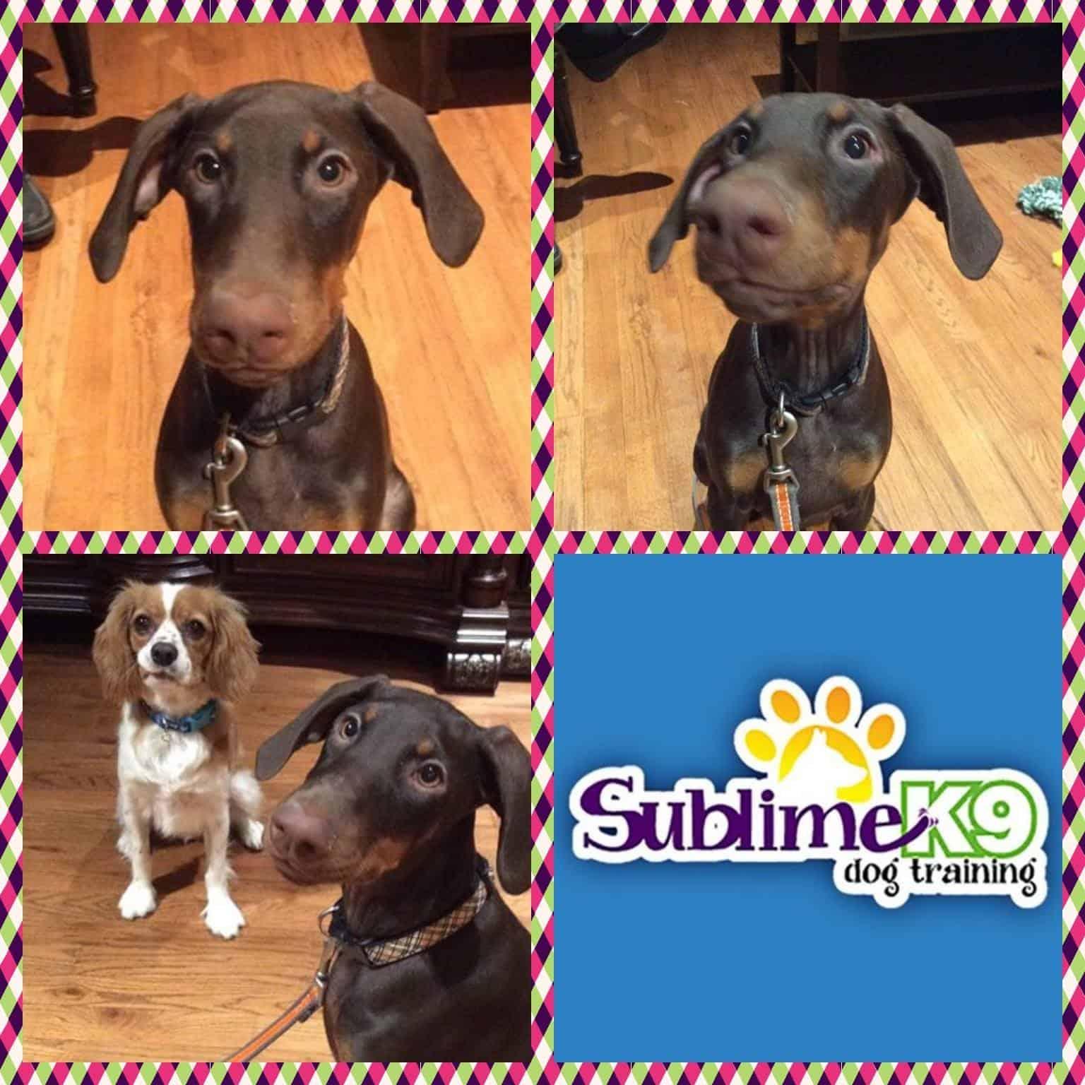 Sublime K Dog Training