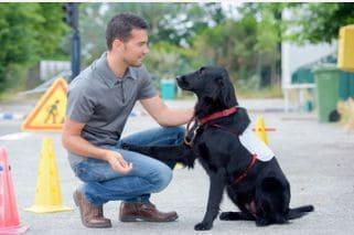 online dog trainer certification course