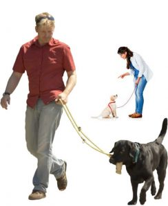 online dog trainer certification course